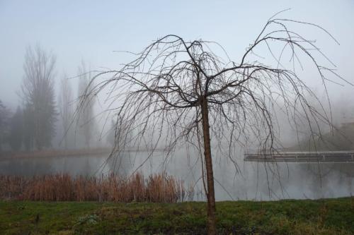 Fotografie města - zimní rybník