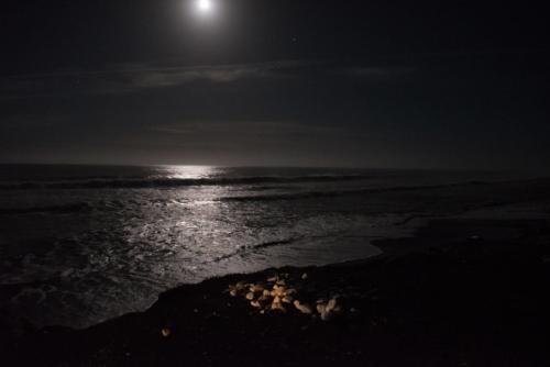 Fotografie přírody - Odraz měsíce v noční hladině oceánu