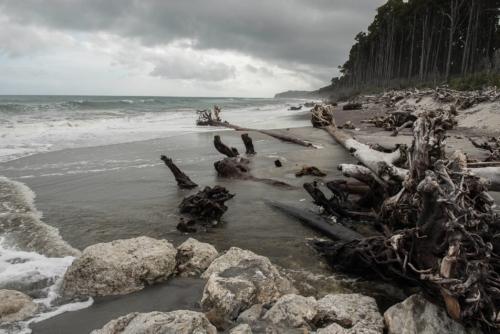 Fotografie přírody - Omleté dřevěné klády na pláži