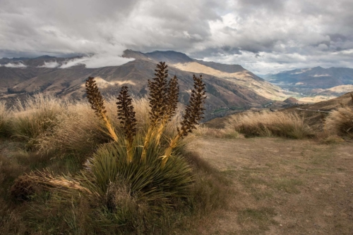 Fotografie přírody - Nový Zéland